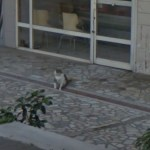 銅像になった猫のTombili、生前の姿がストビューで発見される