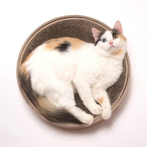 161028garigari01 600x600 - バリバリしたりゴロゴロしたり、すり鉢状の爪とぎ付きの猫ベッド