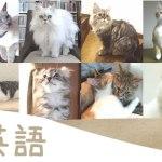 かわいい猫の写真を見れば、なぜか語学の時間になる「ネコ英語」