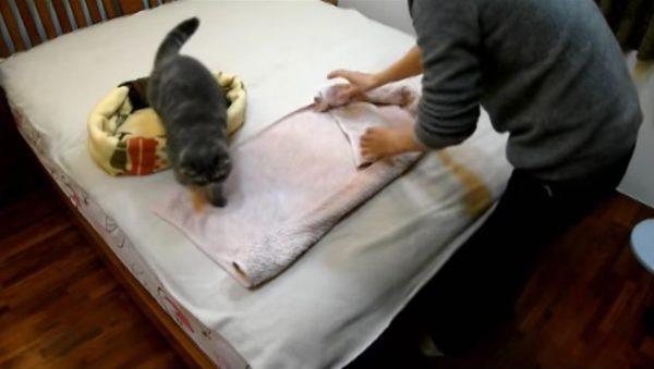 161107catbed 600x339 - 冬の寝床にDIY、毛布とタオルの猫ベッド