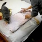 冬の寝床にDIY、毛布とタオルの猫ベッド