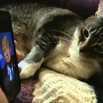 トランプ氏だけに威嚇する猫、大統領を予言した可能性が生じる