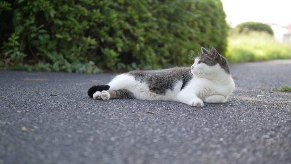 1611174kcatmovie 600x338 - 4K画質の猫動画、商用利用も可能で無料