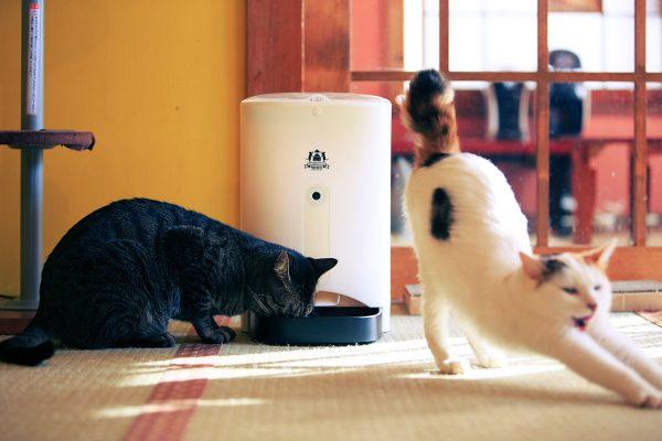 161126nekomeshifeeder 600x400 - 買うだけでも猫助けになるIoTの「ネコメシフィーダー」、CF支援を募集中