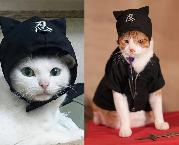 161212kintoki04 600x486 - 抱かれる姿は甘える家猫、その正体は猫忍
