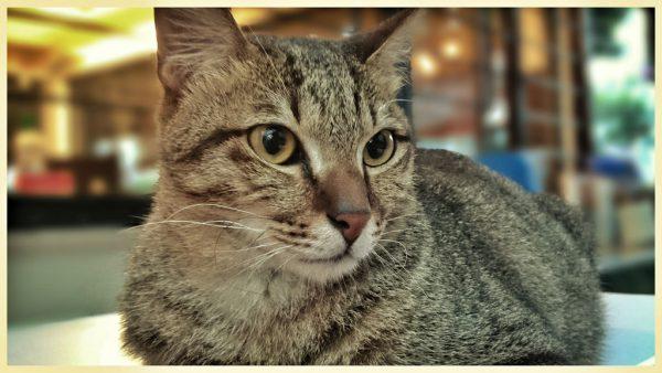 161217cat 600x338 - 本日の美人猫vol.217
