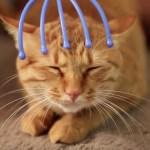 見る見るうちに微睡む猫、眠気の理由はあの道具