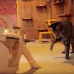 猫の粗相も吸い取れる、水洗いクリーナーヘッド。コラボプランで保護猫も助かる