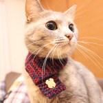 年の初めのおめかしに、猫専用のおしゃれなマフラー