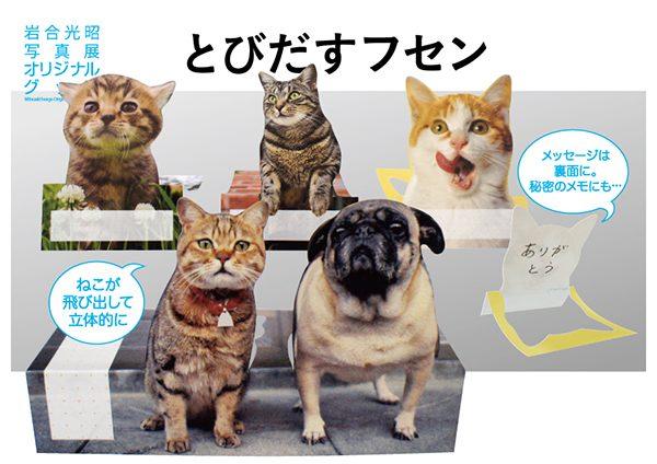 161228cat02 600x424 - 恒例の岩合さんの猫写真展、年末年始に全国各地で