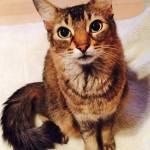 本日の美人猫vol.220