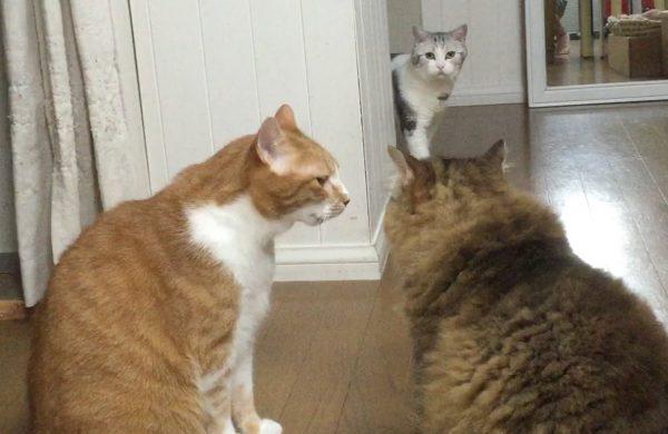 170109cats 600x390 - 喧嘩の渦中に通り行く猫、予想通りのもらい事故