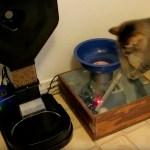ボールを入れたらご飯が出てくる、ハイレベルな猫用給餌機DIY