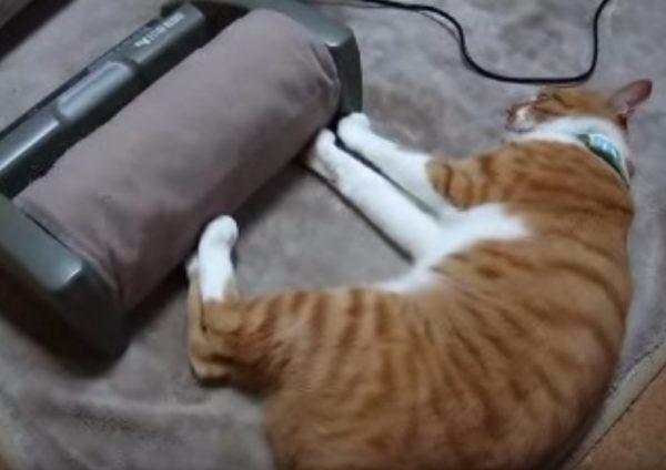 170123cat 600x424 - 猫だって足裏刺激は気持ちいい、肉球振るわす甘美な振動