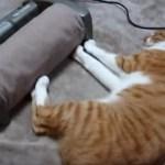 猫だって足裏刺激は気持ちいい、肉球振るわす甘美な振動