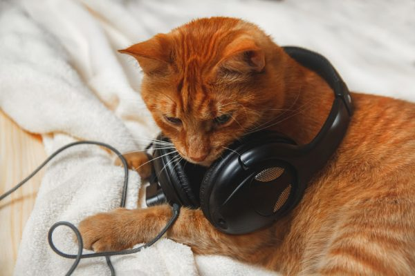 "170125headphonecat 600x400 - 愛猫の抜け毛で作る、""この世に1機""のヘッドホン"