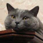 本日の美人猫vol.222