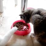 そろそろり引き寄せ盗む猫ご飯、ゆるりゆるりと実効支配