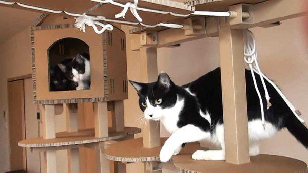 170221fittree 600x338 - 自宅で作れる猫フィットネスモジュールプロジェクト、CFで支援を募集中