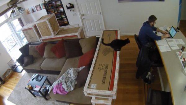 170226catjump 600x338 - 忍び足背後に近づく黒い猫、確定申告準備を阻む
