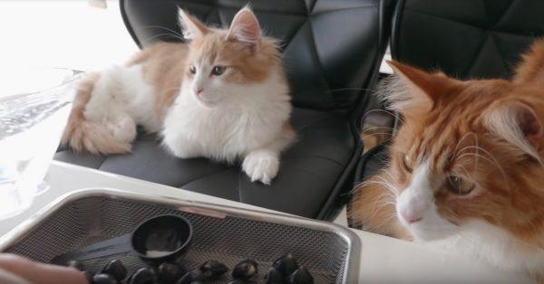170228catramen 600x314 - 見終えると今日のランチはラーメンに、不思議と決まる猫動画