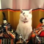 新形雛壇フォーメーション、お内裏様にお雛様も一つおまけにお猫様