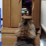 信心深い猫のお参り、仏壇開いてお鈴を鳴らして