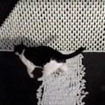 途中で止まったドミノに助太刀、猫鼻ひと押し壁が崩壊