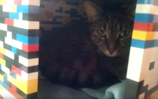 170401cat 600x376 - レゴで作った猫ハウス、狭くて暗くて猫には快適