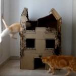段ボール製の猫ハウスを、3匹の猫が1年間使うとこうなる