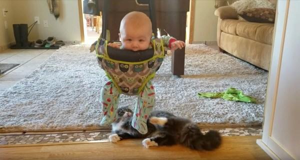 170404cattoy 600x320 - 宙に浮く動くオモチャに夢中な猫、クルクル回る赤子も笑顔に