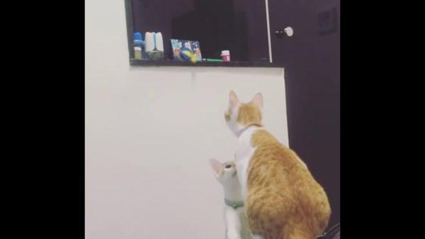 170407cat 600x338 - オモチャが取れない猫の弟、姉ちゃん頼って願いを叶える
