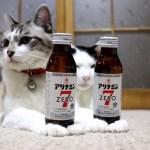 猫の手に聳える2本のドリンク剤、軟弱地盤にあえなく転倒