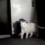 トイレを倒して脱走する猫、暗視カメラにその一部始終が
