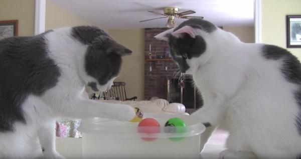 170507watersoccer 600x318 - 2匹の猫のウォーターサッカー、ネズミのボールの争奪戦