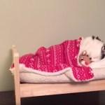 目指すは猫用マイベッド、布団を掛けたら即就寝