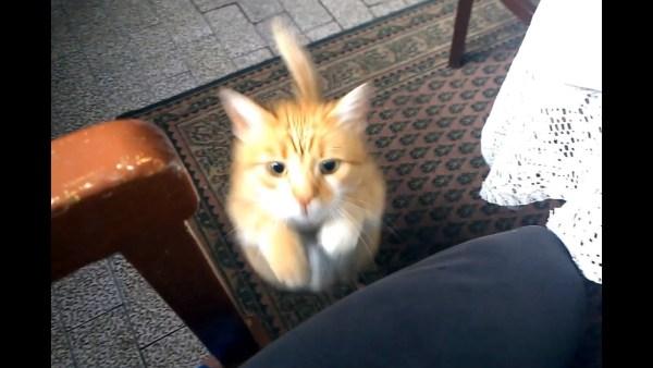 170708cat 600x338 - 人間を置物と化す猫の魔法、膝上占拠で動きを封じる