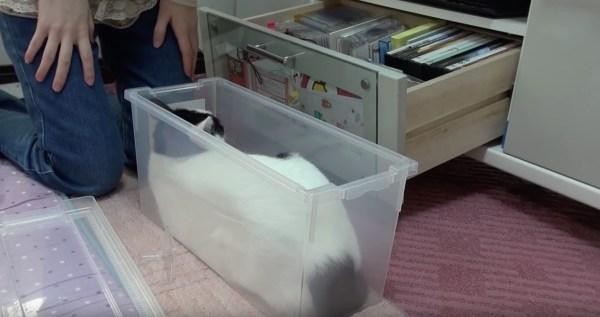170729dvdboxcat 600x317 - 新喜劇っぽい猫のコント、収納ボックス小道具にして