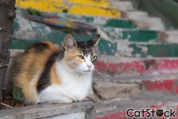 170821catstock 600x400 - ブログには無料で使える、猫写真専門のストックフォトサイトが登場
