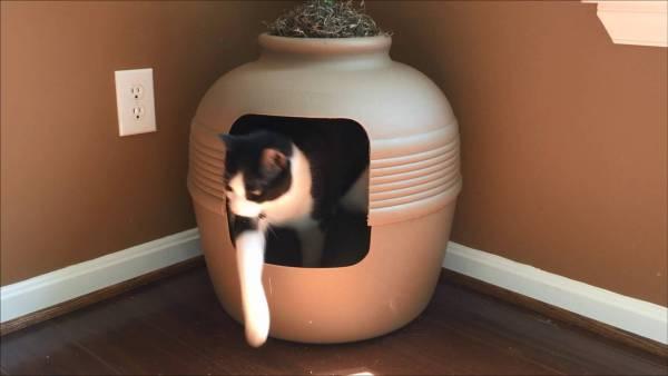 170901cattoilet 600x338 - 植木鉢型猫トイレ、お部屋になじむインテリアと言えなくもなく