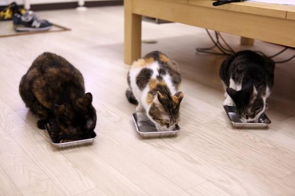 170927 IMG 7334 2000 600x400 - 猫とはたらくvol.01「目的は、猫を職場で飼うことではなく、保護できる猫を増やすため」