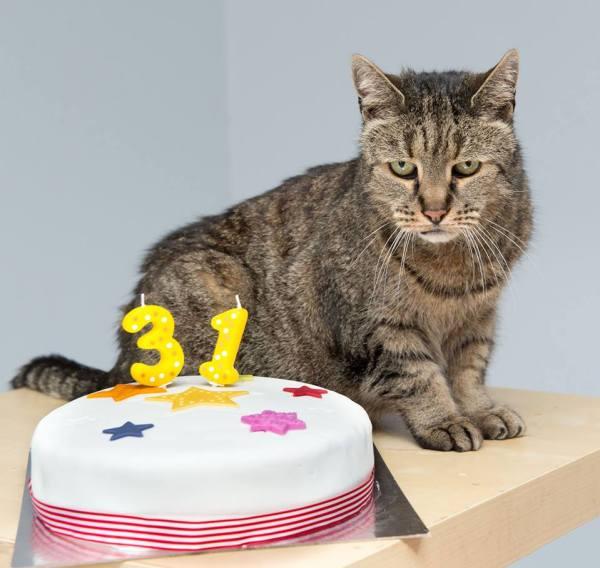 171022Nutmegrip 600x568 - 昭和生まれと思しき猫のナツメグ、32歳で虹の橋を渡る