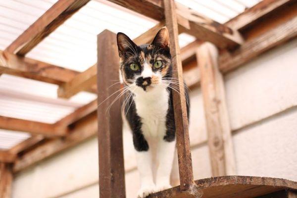 171101hakoniwa03 600x400 - 保護猫旅館計画第3弾、今度は秩父の温泉旅館で