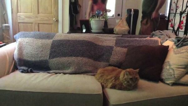 180202catonsofa 600x338 - ドッキリの仕掛け役に参加する猫、何食わぬ顔で成功に導く