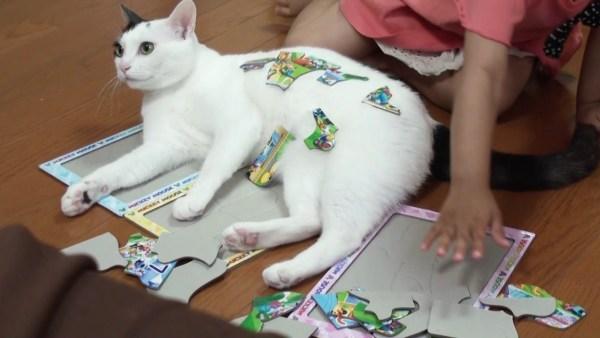 180206catpuzzle 600x338 - パズルの上に載ったつもりが、ピースを積まれてやや驚く猫
