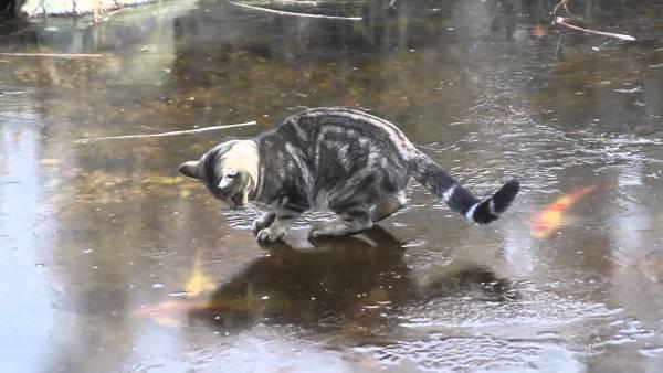 180213catskate 600x338 - 氷上を華麗なステップで舞い踊る猫、エキサイトして最後は木登り