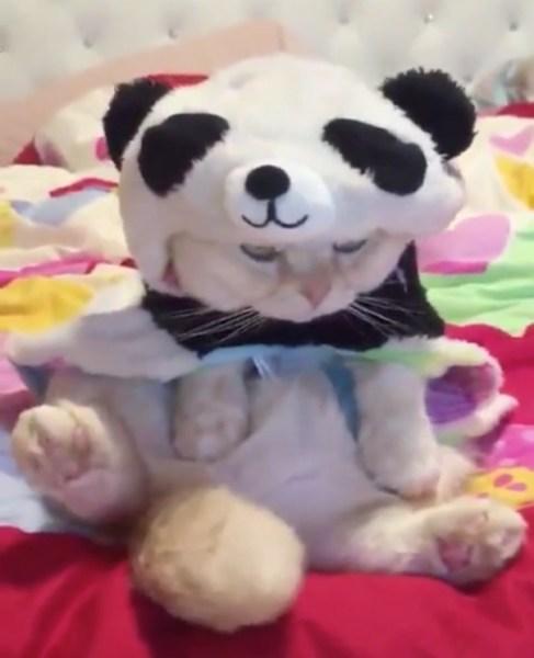 180326catpanda 487x600 - パンダの着ぐるみまとった猫、アングルによっては完全なパンダに