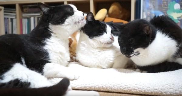 180511cats18years 600x319 - 3匹の猫の兄妹誕生日、そろって仲良く18歳に