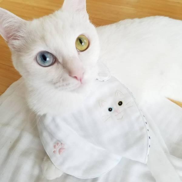 180525catbijin 600x600 - 本日の美人猫vol.268