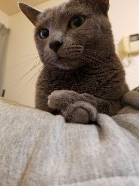 180601cat e1527862303616 450x600 - 本日の美人猫vol.269